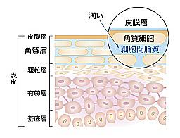 角質層の奥まで美容液成分が届いて、しっかり美白ケア(イメージ図)
