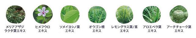 「フォードヘア化粧品 シーズントリップ モイスチュアクリーム」に配合されている7種類の植物由来エキス。(イメージ図)